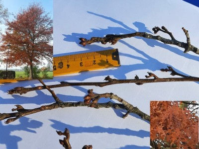 Moeraseik Herfst-en Winterbeelden